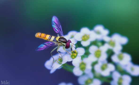 macro-fleurs-insectes-jardin-photographe-miki-asai-16.jpg