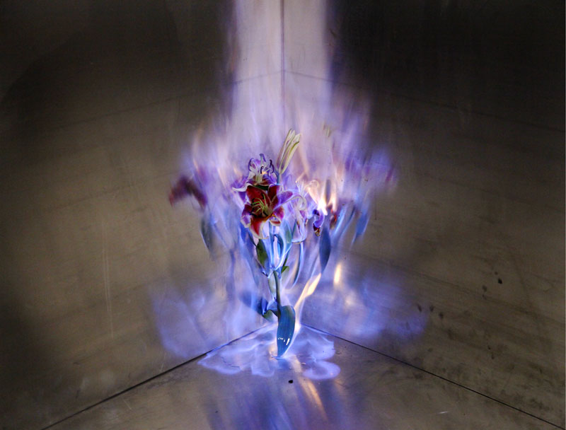 fleur-feu-01.jpg