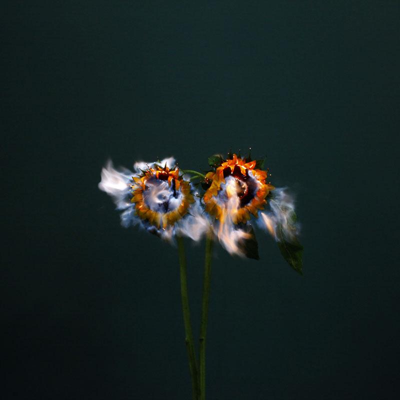 fleur-feu-05.jpg