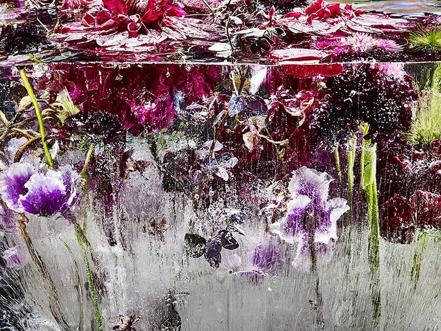 frozen-flowers-locked-in-ether-kenji-shibata-4.jpg