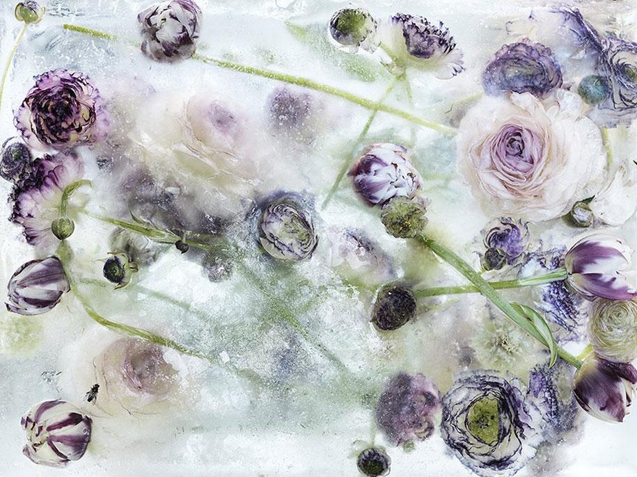 Les-Fleurs-congelés-en-Cubes-de-Glace-ressemblent-à-des-Aquarelles-02.jpg