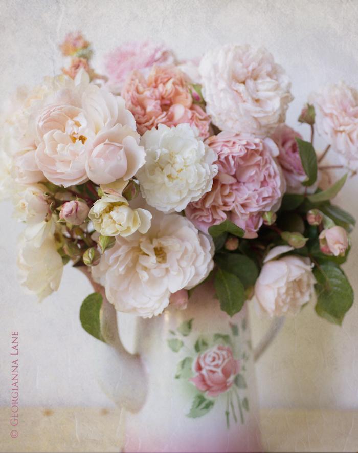 gardenroses1rev.jpg