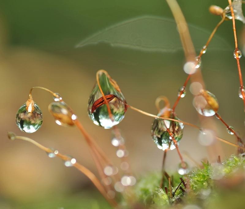 macro-photographu-by-andrey-osokin-31.jpg