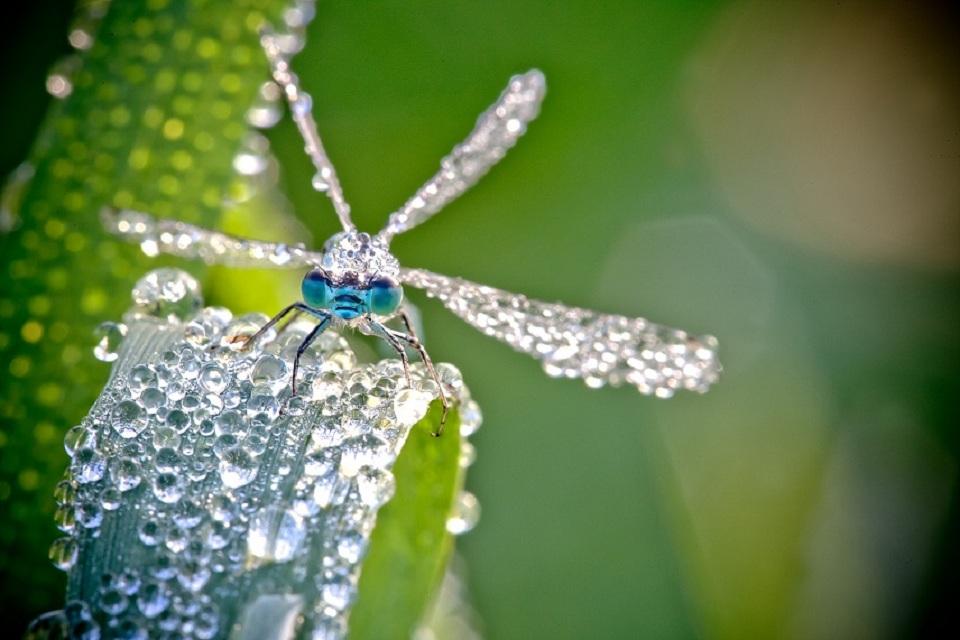 Chambon-Insectes-09.jpg