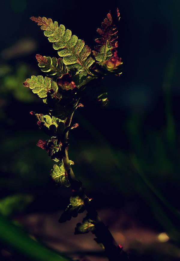 Dragon-Nature.jpg