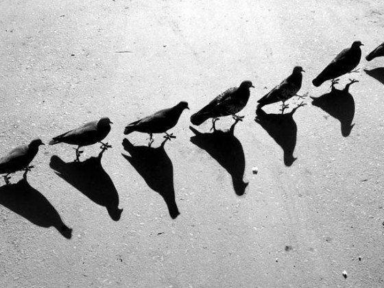 Alexey-Bednij-shadow-photography-3-560x4201.jpg