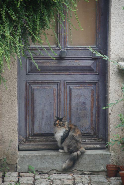 Photo de Fran: Le chat
