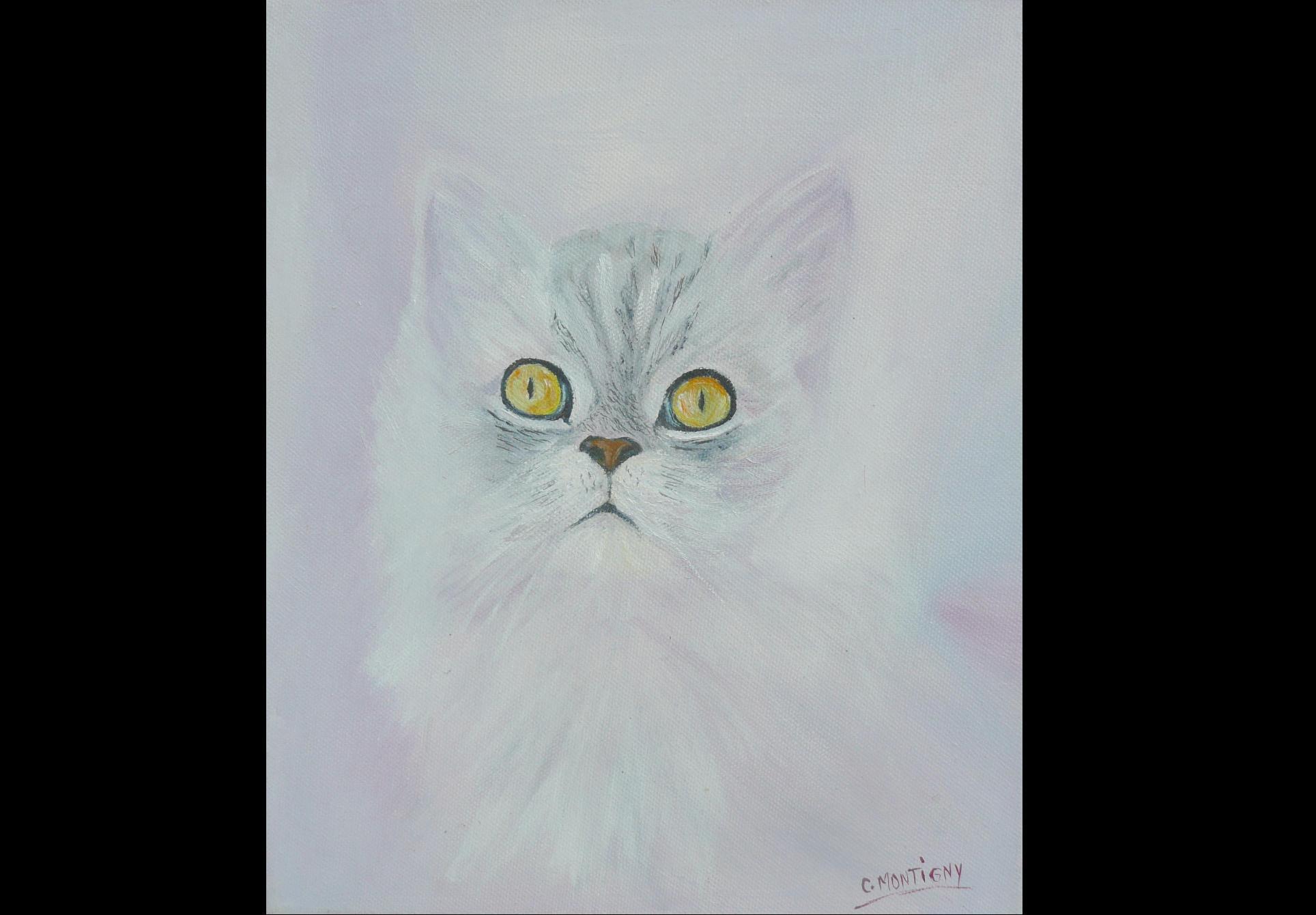 chat blanc2.jpg