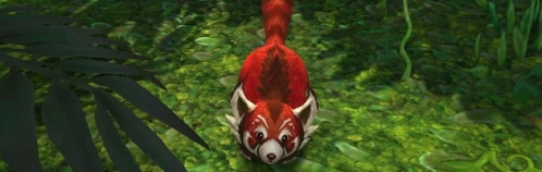 panda-roux-wow.jpg