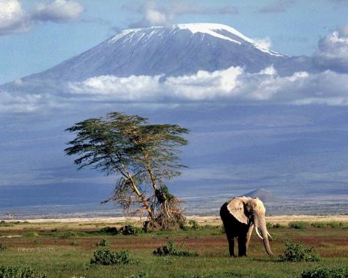kilimandjaro-elephant.jpg