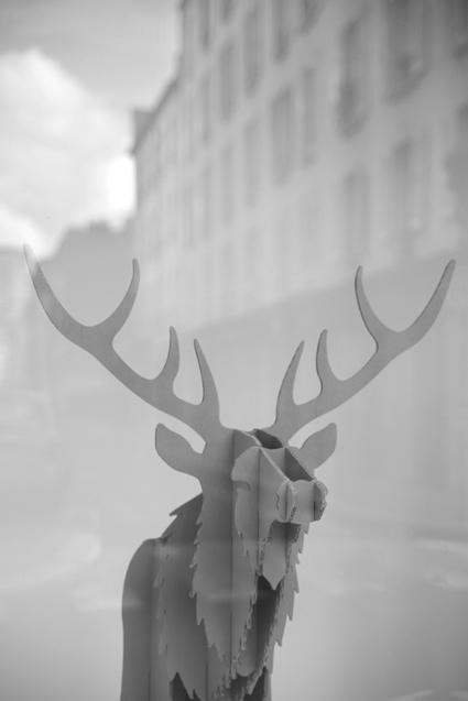cerf urbain_web.jpg