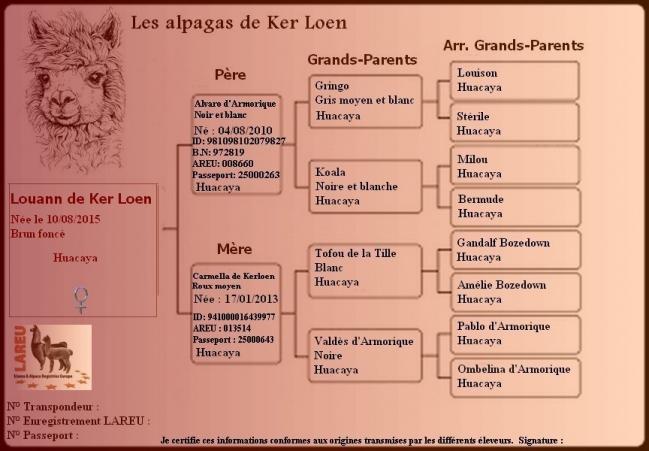 Pedigree de Louann .jpg