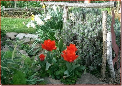 tulipes_narcisses.jpg
