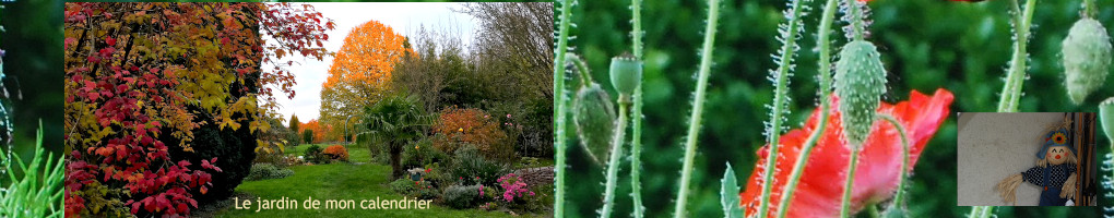 2 jardins, recettes, déco jardin, huiles essentielles, cétoine, anémone , heucheres, nigelle, bowen