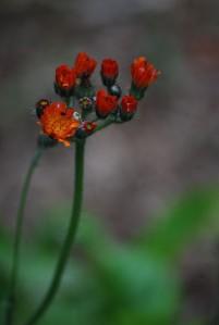 plantes-du-jardin-6638.JPG