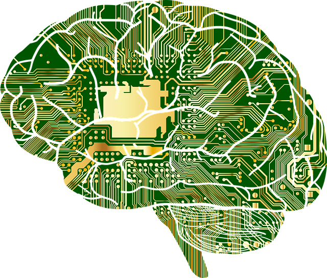 cerveau et circuit .png