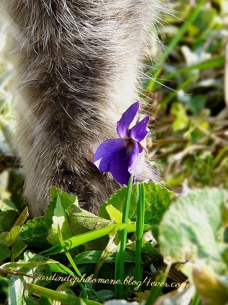 violette-cleo.jpg
