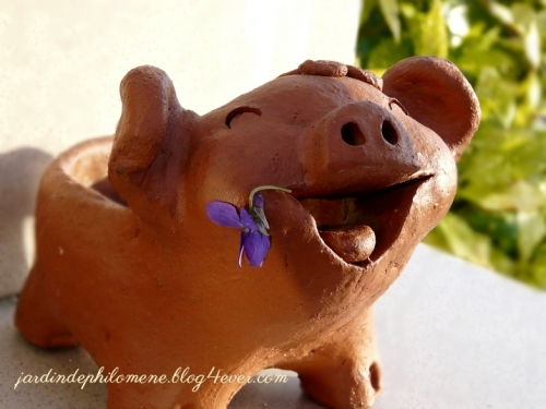 violette-cochon.jpg