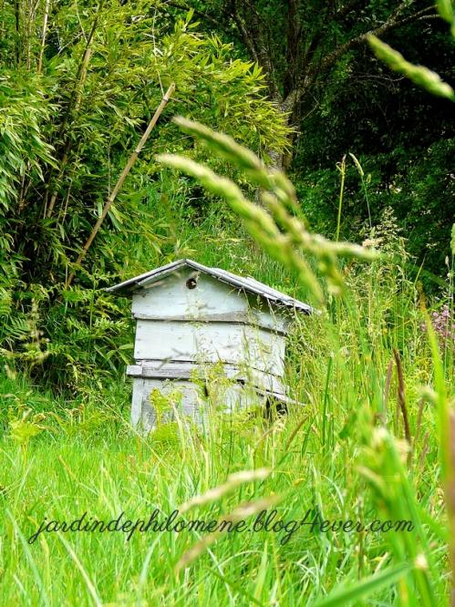 aulon-ruche.jpg