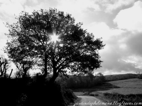 arbre-GP.jpg