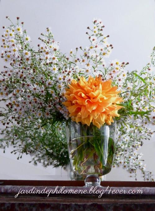 bouquet_aster.jpg