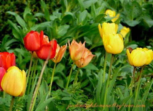 tulipe-orange.jpg