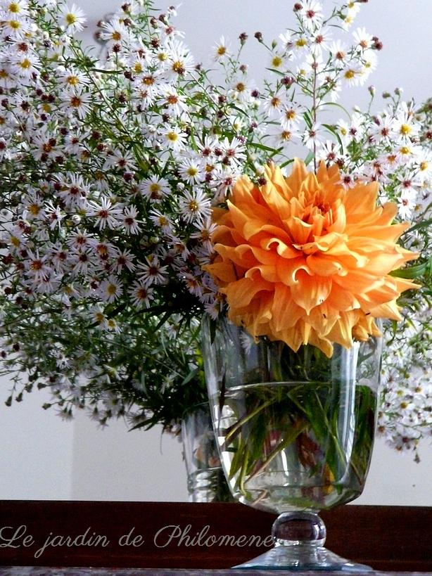 bouquet-aster-annie.jpg