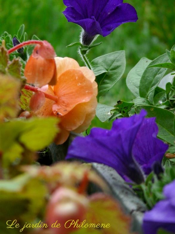travaux-jardin-jardiniere.jpg
