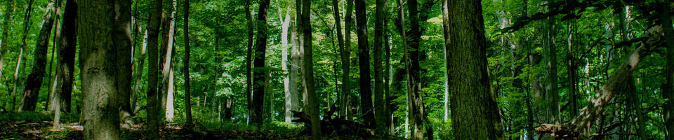 GUITART TRAVAUX FORESTIERS