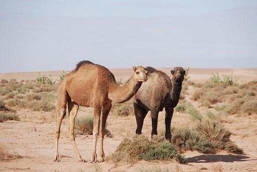 Maroc 2014_556.jpg