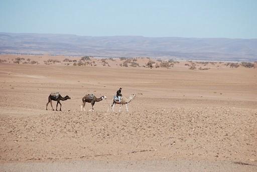 Maroc 2014_636.jpg