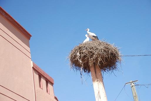 Maroc 2014_1225.jpg