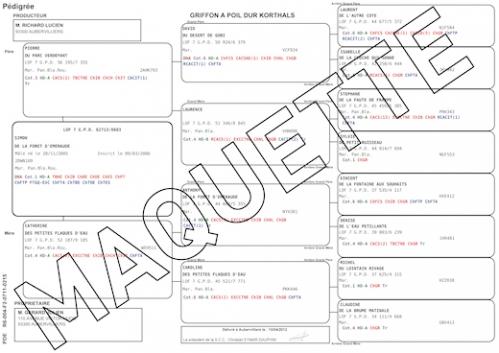 facsimlé_certificat de naissance_interieur.jpg