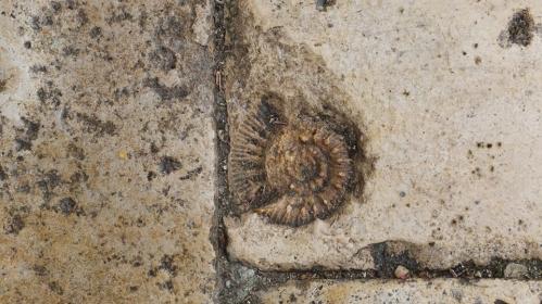 escargot portail sud cathédrale de Moissac.jpg