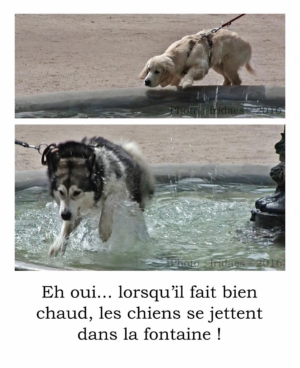 Ylsthia - fontaine aux chiens - Imaginales 2016 (979x1200).jpg