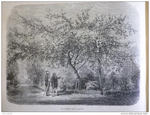 gravure de Molet 1878.jpg