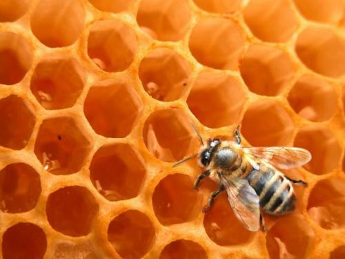 abeille_ruche.jpg
