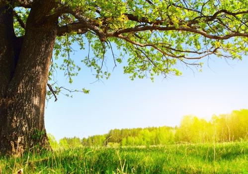 Under the tree лето солнце природа дерево зелень листва 4802x3380.jpg