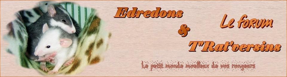 edredons-et-tratversins