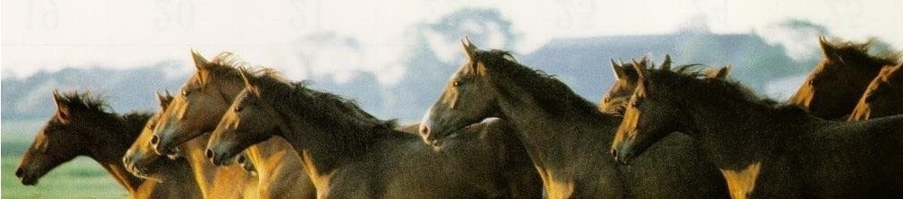 1973c-chevaux_fond.jpg