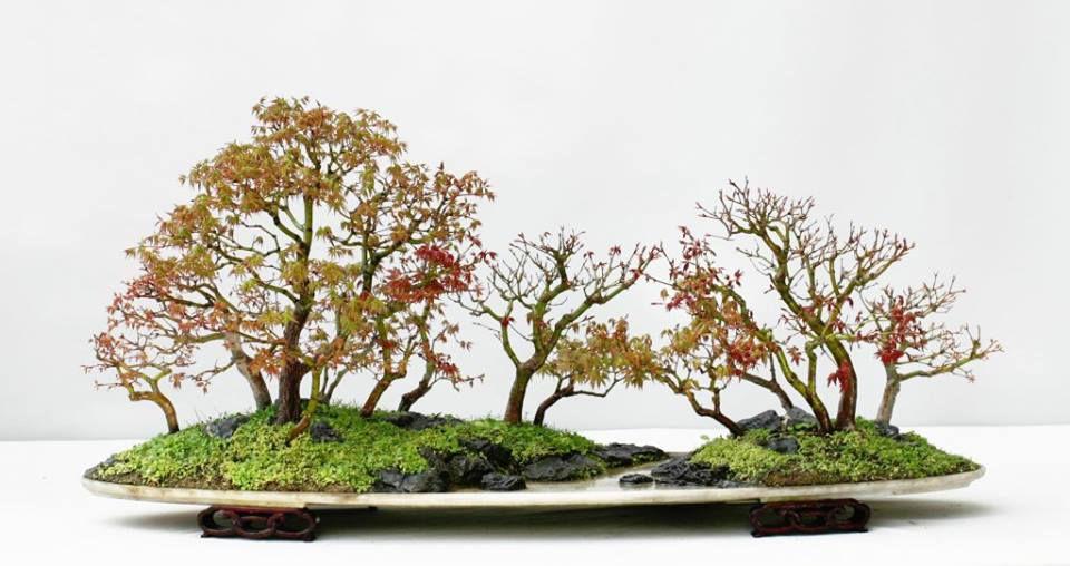 Les amis du bonsai Morlaix
