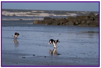 Kings plage1.jpg