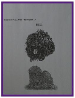 Puli17.jpg