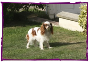 Mes chiens 3.jpg
