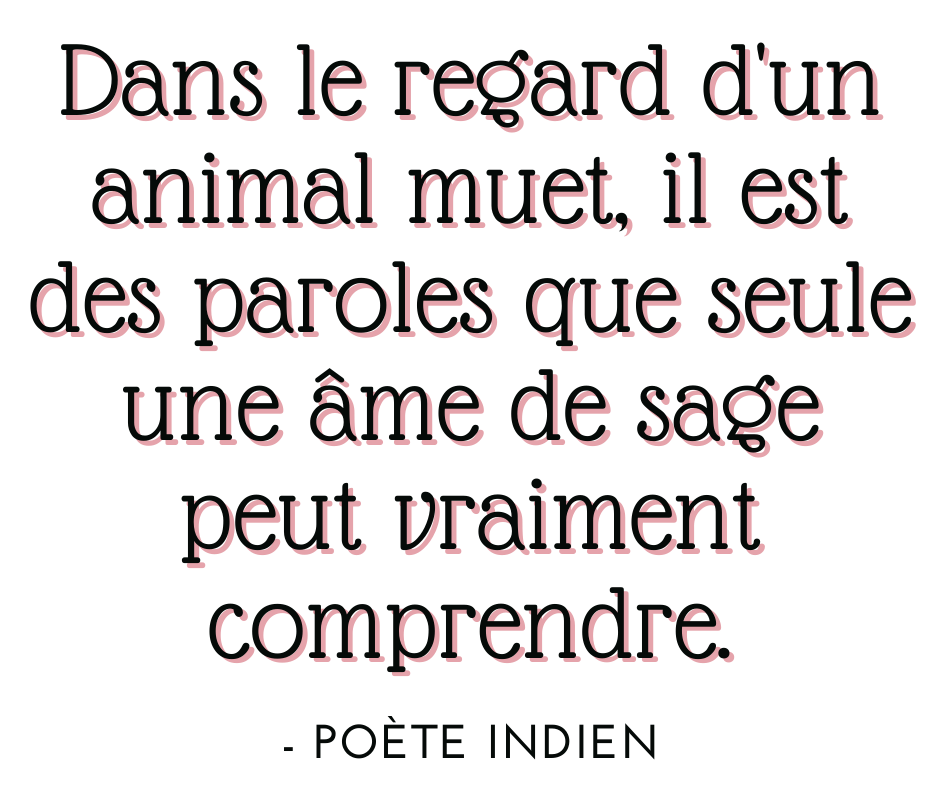 Copie de citation