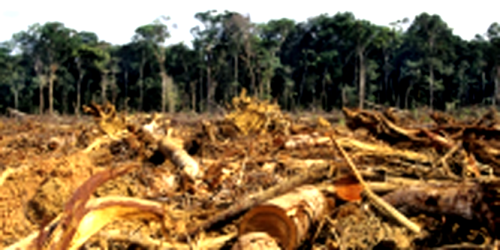 1359 Deforestation-Amazon-1024x667 3 200x100