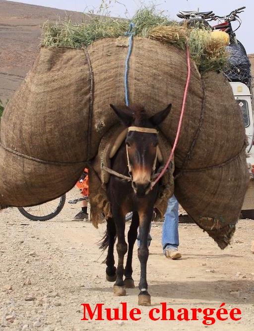 Mule chargée.jpg