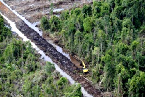 palm-oil-deforestation-006.jpg