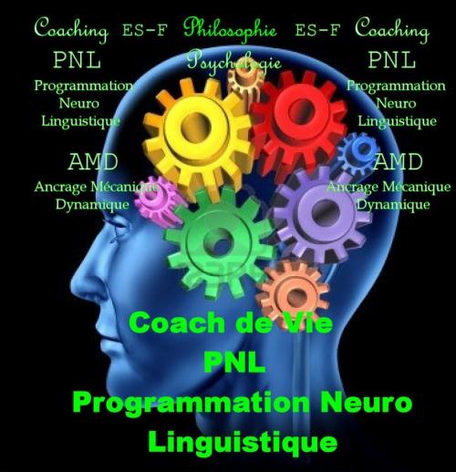 pnl1.jpg