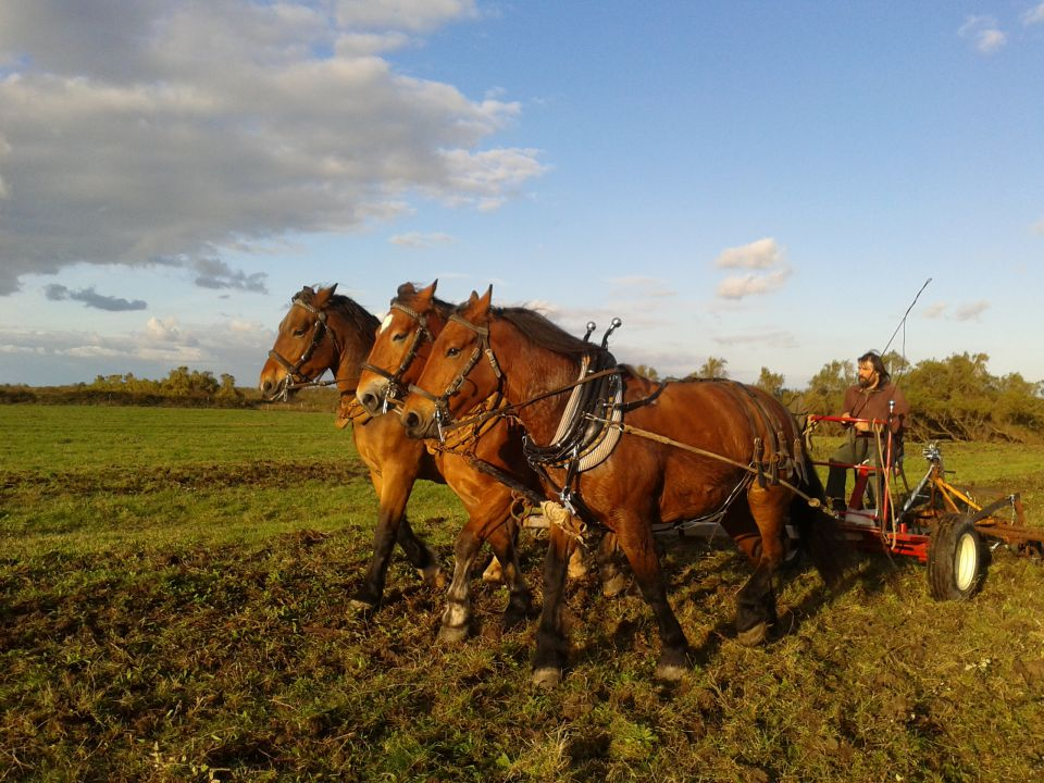 traction-animale-vendee